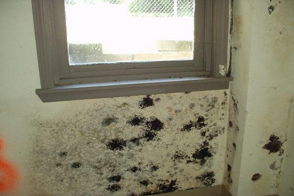 Eliminating Dangerous Fungus in Your Home