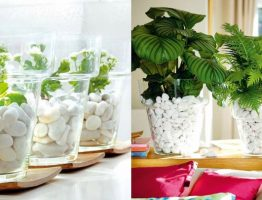 Decorate-with-Indoor-Plants