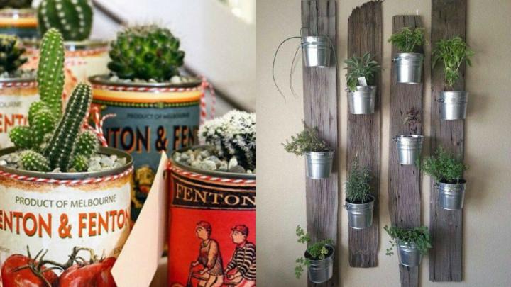 Decorate-with-Indoor-Plants