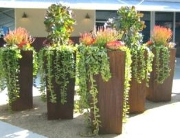 Tall Glazed Planters